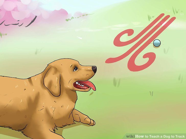 Image titled Teach a Dog to Track Step 8