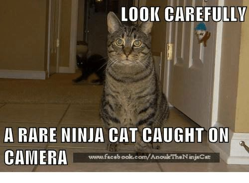 Memes Camera and Ninja LOOK CAREFULLY A RARE NINJA CAT CAUGHT ON CAMERA