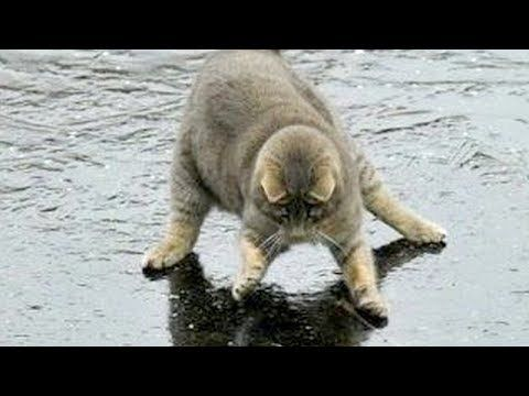 You will LAUGH SO HARD that YOU WILL FAINT FUNNY CAT pilation
