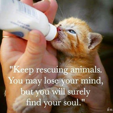 Keep rescuing animals