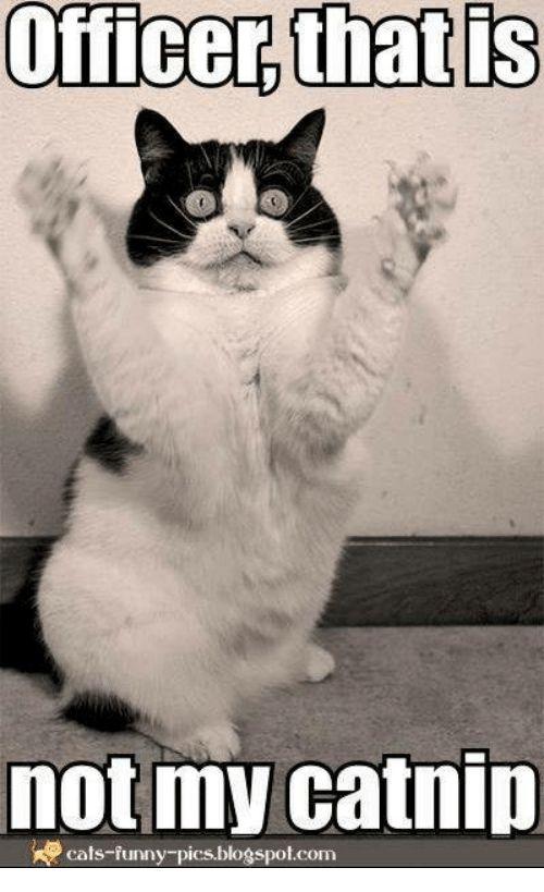 Cats Funny and Memes not my catnip cats funny pics