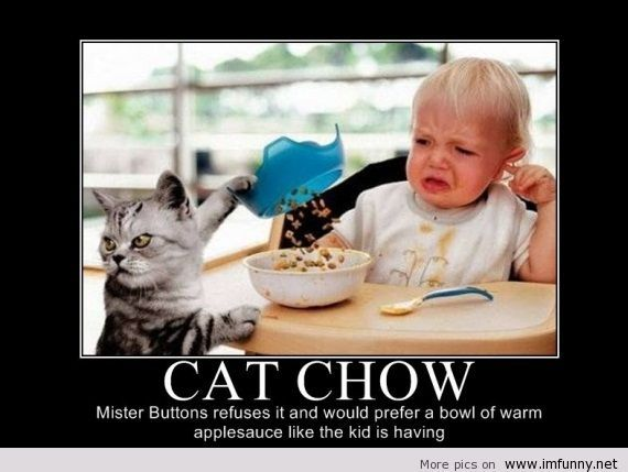 Funny cat chow