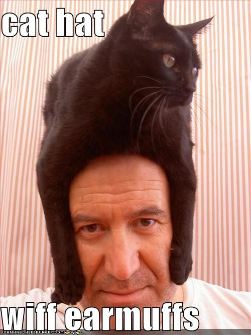 funny pictures cat hangs angel