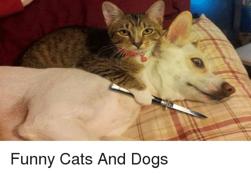 Cats Dogs and Funny