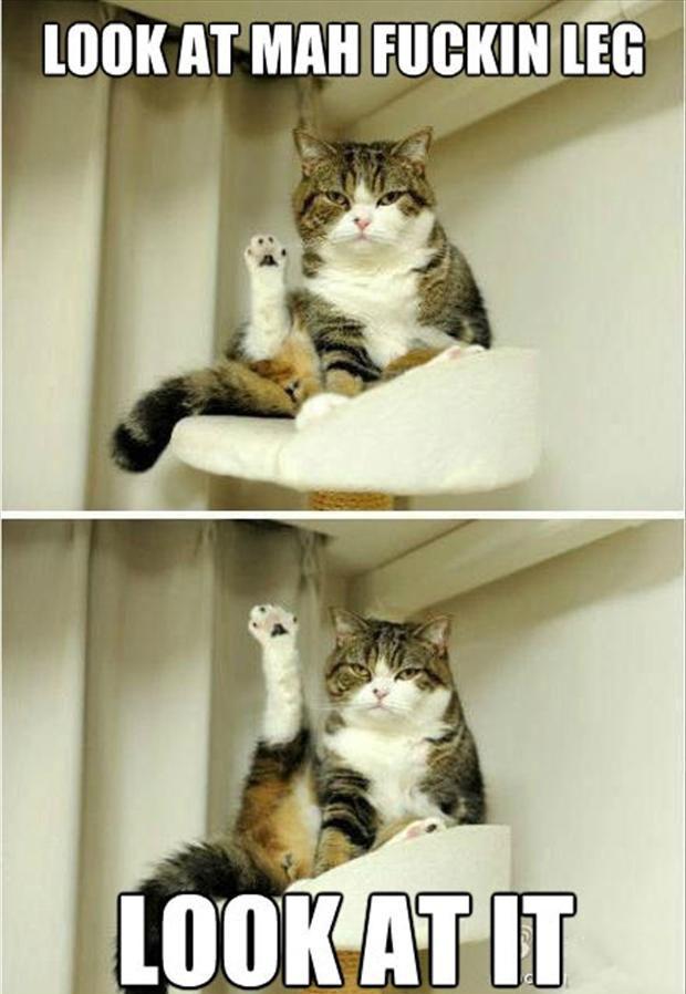 funny cat look at my leg
