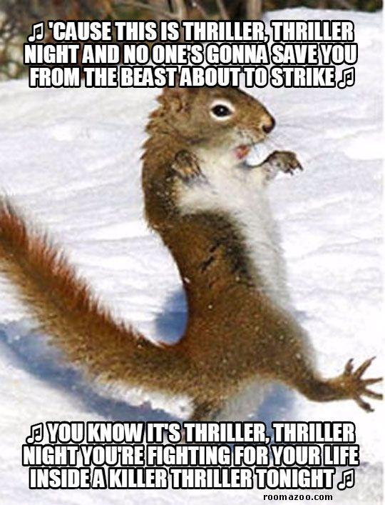 Thriller Squirrel funny animals meme pic best humor website