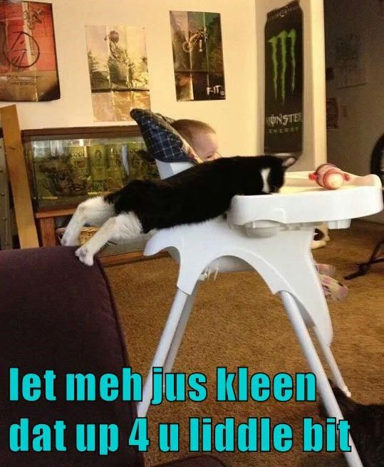 that clean bit kitty caption little