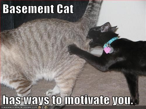 Cats basement cat motivation funny