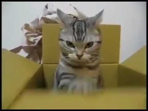Funny Cat Sends an encrypted message to the military base
