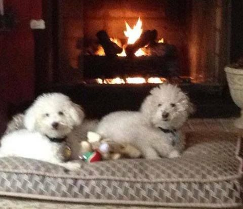 Holiday Pet Contest 2014