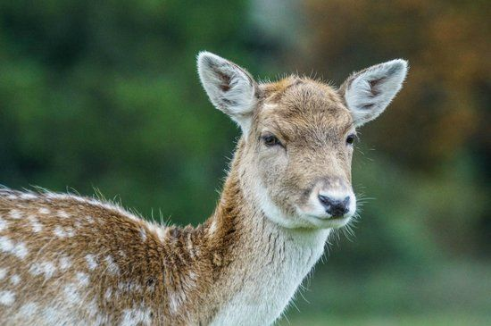 South West Deer Rescue Crewkerne 2019 All You Need to Know Before You Go with s Crewkerne England