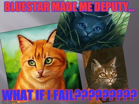 full funny warrior cat memes source s game firestar
