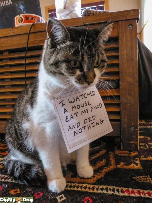 Have seen all the Dog Shamings but this is too funny it hits home it reminds me of our resident cat work Donna