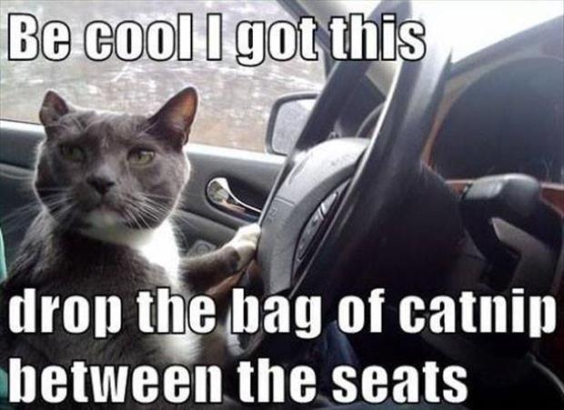 funny cat has catnip