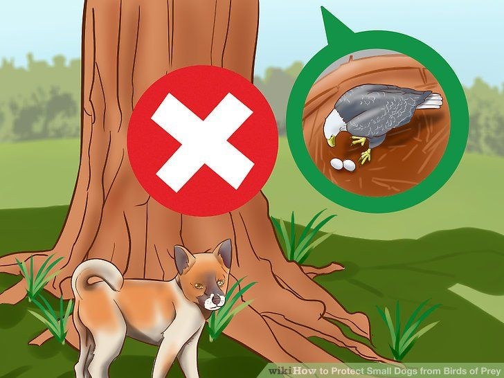 Image titled Protect Small Dogs from Birds of Prey Step 7