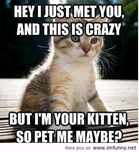 Kittens with Sayings