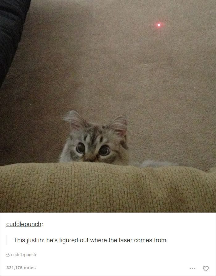 18 Hilarious Tumblr Posts About Cats