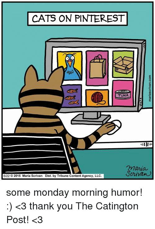 Cats Memes and Mondays CATS ON PINTEREST TUNA maria Scrivan 6 22