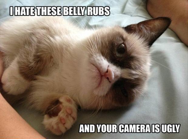 tard grumpy cat belly rubs ugly s