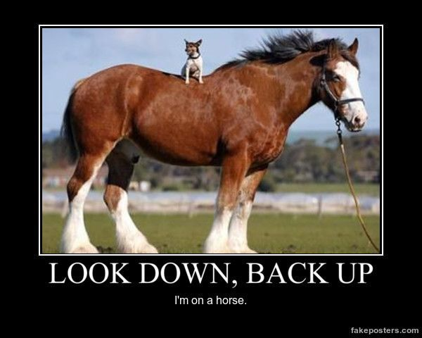Look Down Back Up Demotivational Posters More Cute Odd Couples Dog Lovers