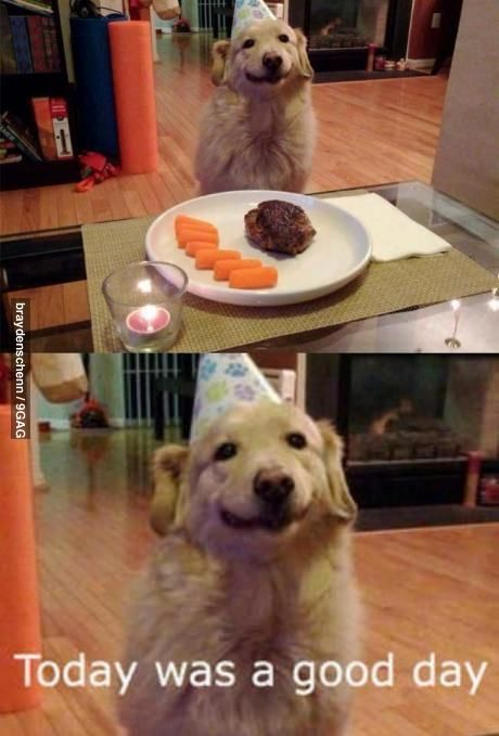 "That happy face on that birthday dog just makes me smile He s saying ""Today was a good day """