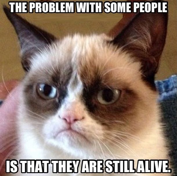11 Angry Cat memes very funny 2013 funny