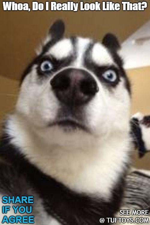 "TufToys Picks For Xmas Big 14"" Tough Dog"