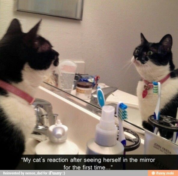 That s so cuteeeee Help Cat Pep Talks Animal Funnies