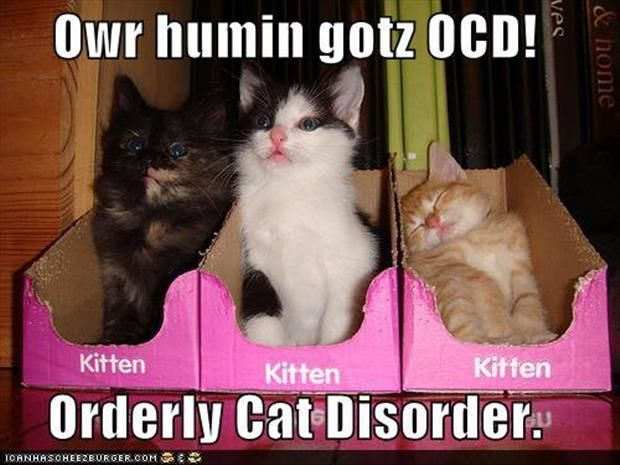 funny ocd pictures crazy cat lady