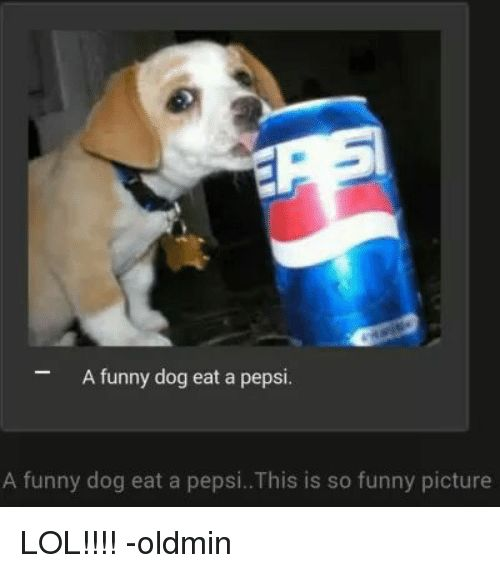 Dogs Funny and Lol A funny dog eat a pepsi A funny