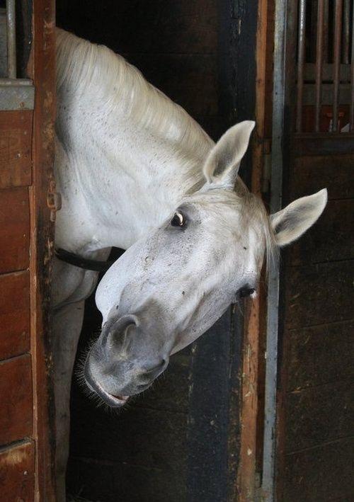 Peek A Boo funny horse face