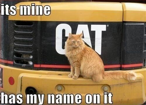 Its mine Funny Cat Meme