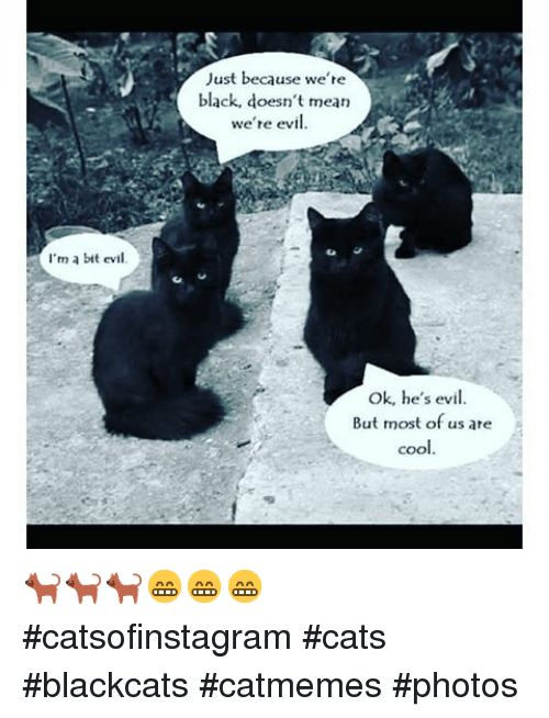 Cats Funny and Black I m a bit evil Just because