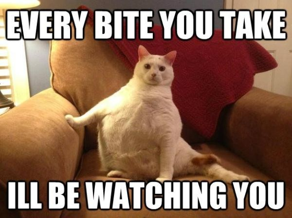 Fat Cat Meme Every bite you take i ll be watching you