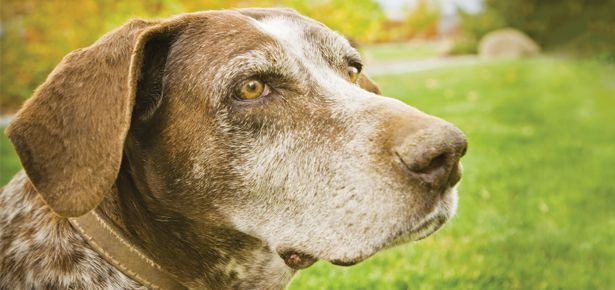5 Signs Your Dog s Vision is Worsening