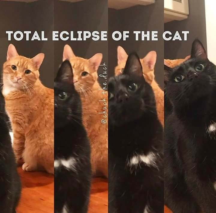 Even cat can pull it off no just the sun Total Eclipse Lunar