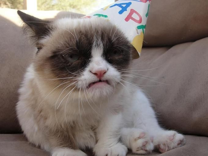 Grumpy Cat in a Happy Birthday Hat PandaWhale