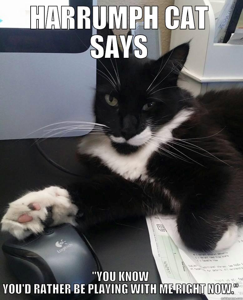 Harrumph Cat on PC