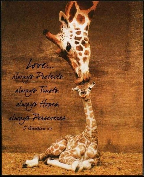 Giraffe Kiss We have this print framed and in Gage s nursery I m not overly fond of giraffe s but this was just too adorable to pass up for his Safari