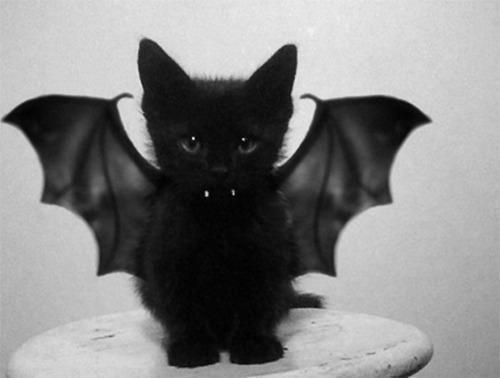 A Cute Cat Inspirational Cute Cats S S Media Cache Ak0 Pinimg originals F3 6d 0d