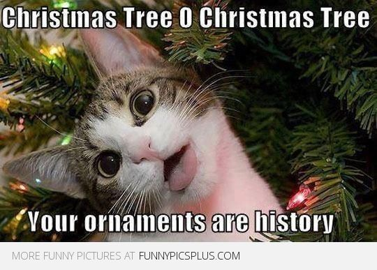 Take the Beautiful Funny Christmas Cat Pictures