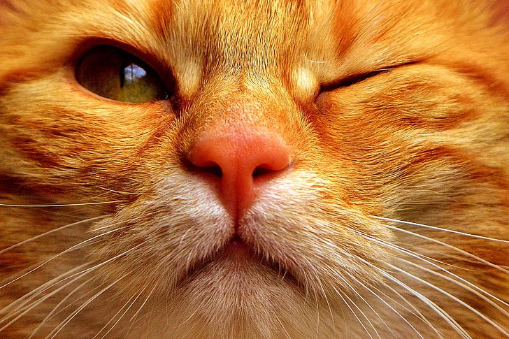 Take the Beautiful Funny orange Tabby Cat Pictures