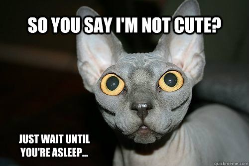 So you say I m not cute Just wait until you re asleep