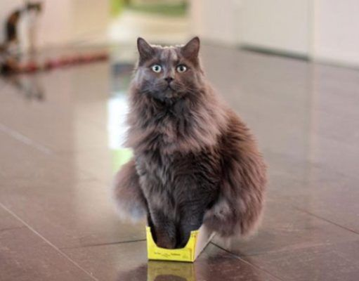 650 R3L8T8D 650 funny cats if it fits i sits 14 511x400