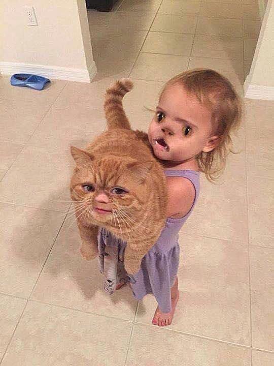 cat face swap 58b8d43b3df78c353c2294ff