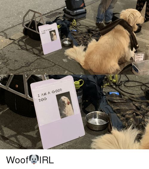 Dog IRL Dog and Sophie I AM A G0OD DOG FOR YOUR SOPHIE