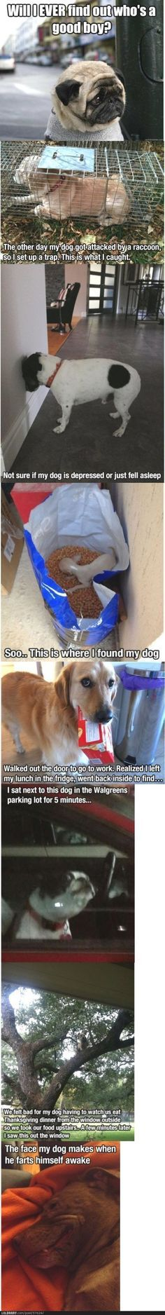 Funny Men Memes Funny Dog Humor Funny Dog Sayings Puppy Quotes Funny