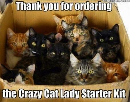 IlikeLOLsDaily Cat lady starter kit