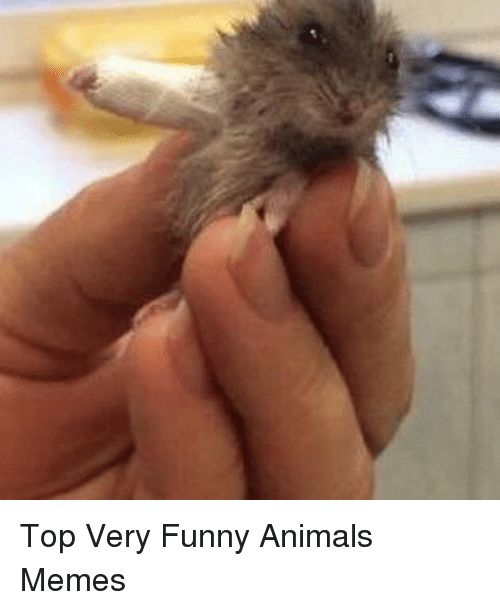 Animals Funny and Funny Animals Top Very Funny Animals Memes