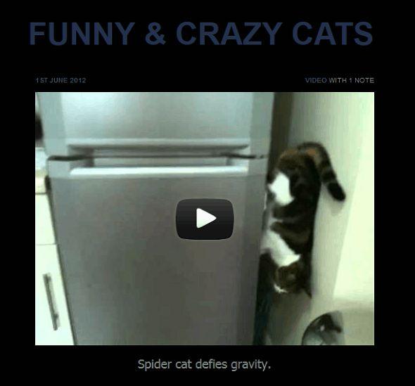funny cat tumblr
